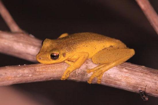 frog-11-katie-odonnell