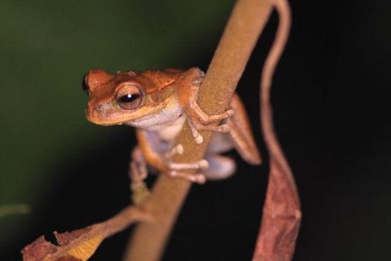 frog-17-katie-odonnell