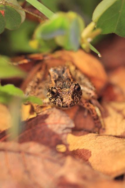 frog-18-katie-odonnell