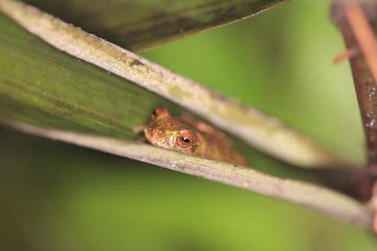 frog-2-katie-odonnell