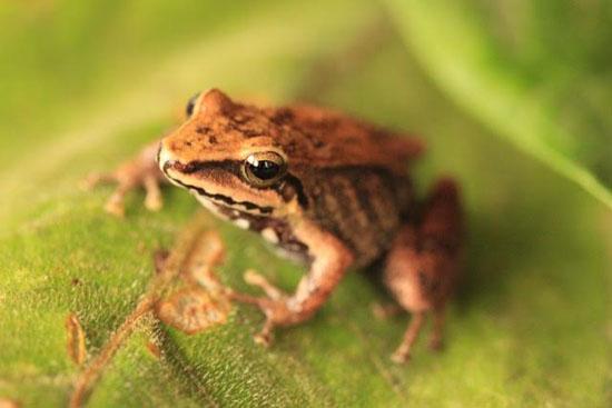 frog-21-katie-odonnell