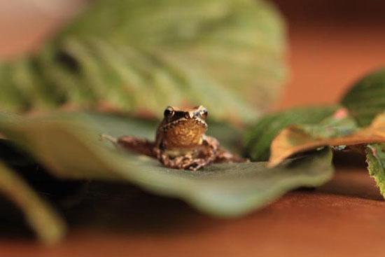frog-3-katie-odonnell