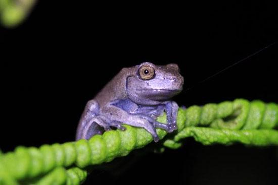 frog-9-katie-odonnell