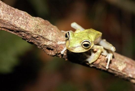 frog ecuador kaya klop toker