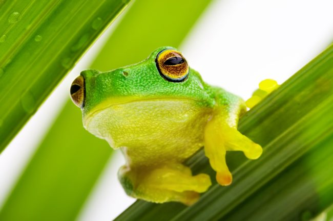 frog-peeking-out-from-the-leaves