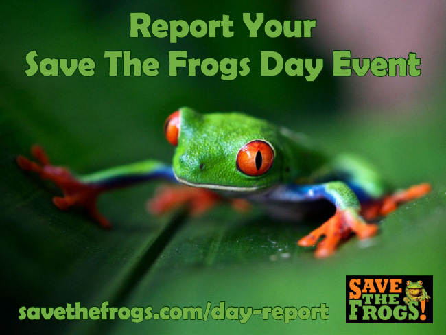 Save The Frogs Day Reporting