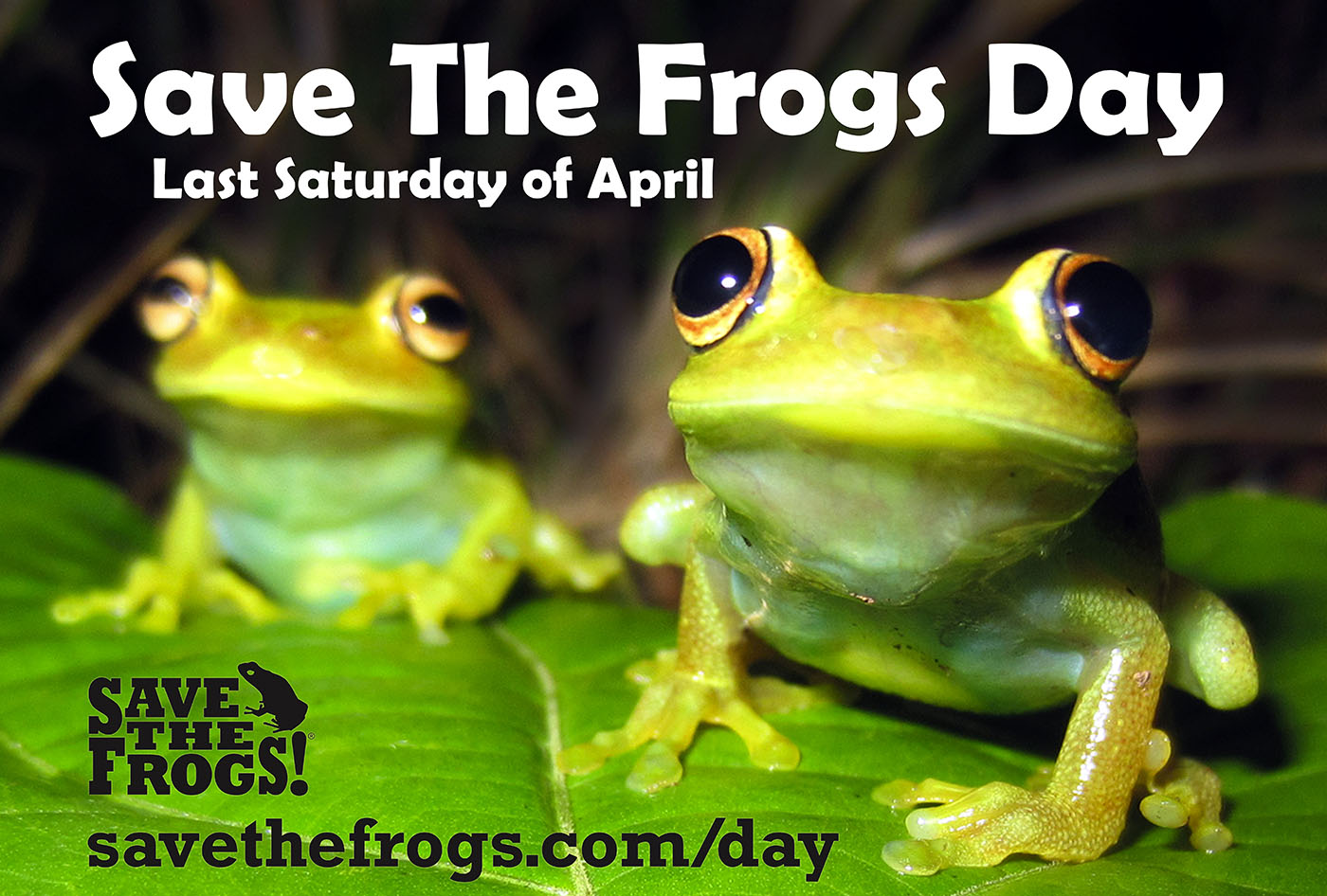 Save The Frogs Day Icon