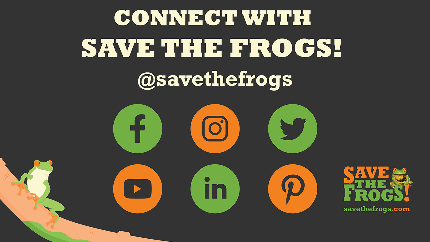 Save The Frogs Social Media