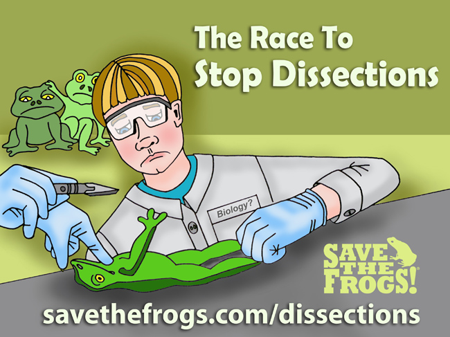 Frog Dissections