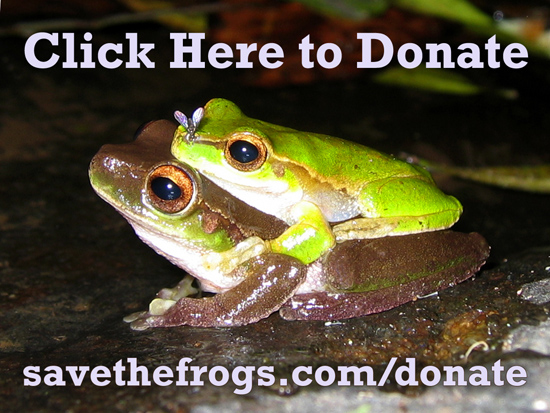 Donate Frogs