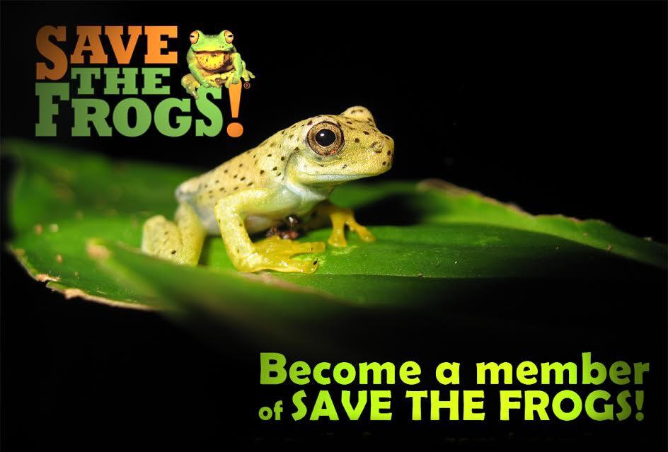 icon member gladiator frog