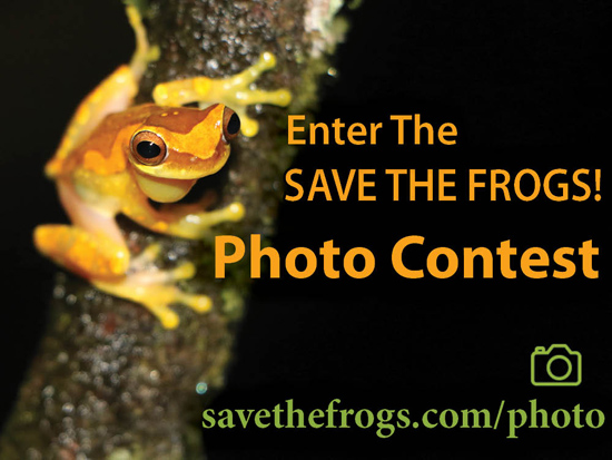 save the frogs photo contest