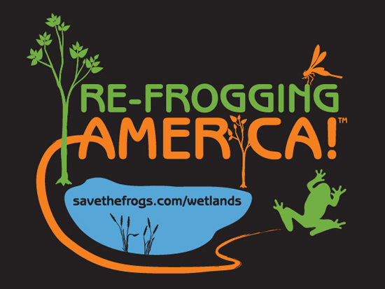 refrogging america