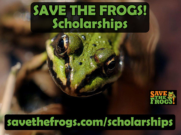 SAVE THE FROGS! Scholarships
