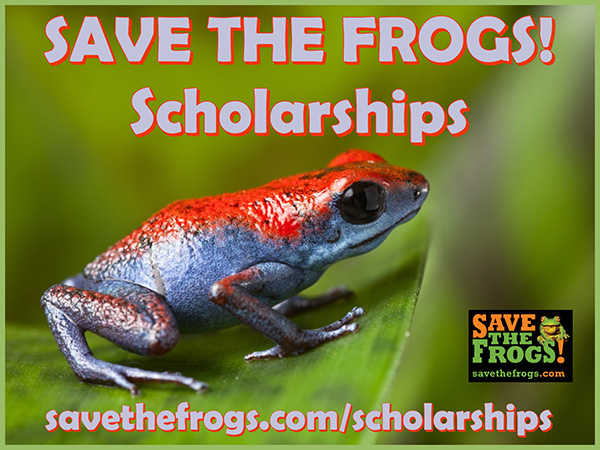 Save The Frogs Scholarships