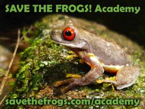 SAVE THE FROGS! Academy