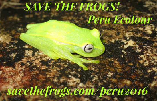 save the frogs peru ecotour 2016
