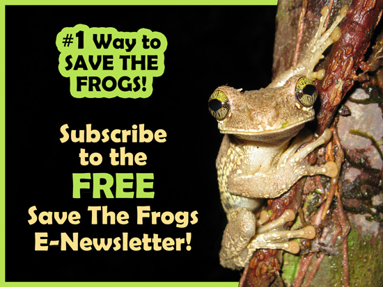 save the frogs newsletter