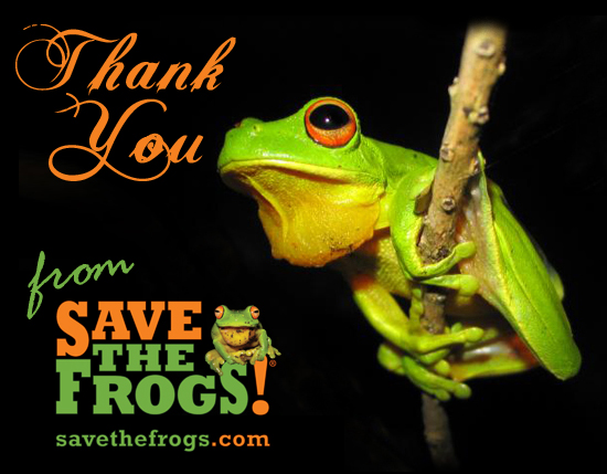 thank you frogs