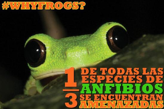 porque anfibios espanol