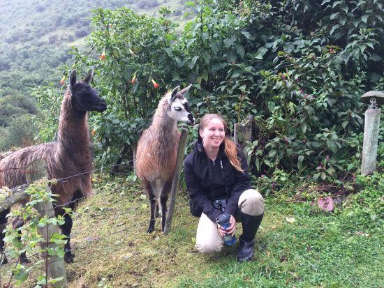 jessica scrivener llamas ecuador ecotour 2016