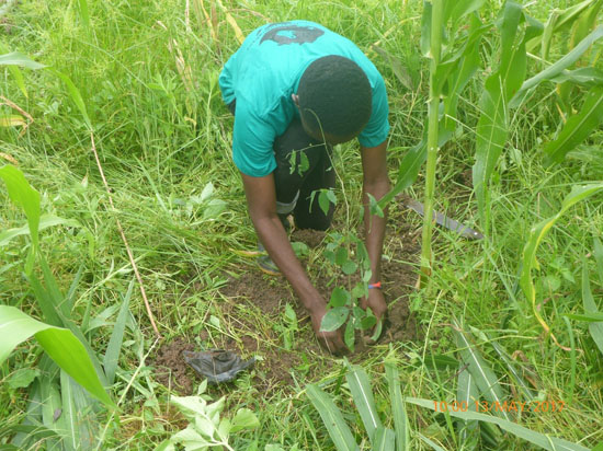 knust chapter member planting a tree