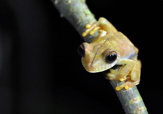 ecuador frogs