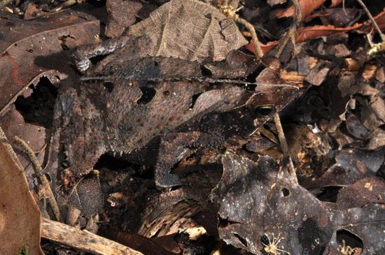 la selva amazon ecolodge ruth van sciver 16