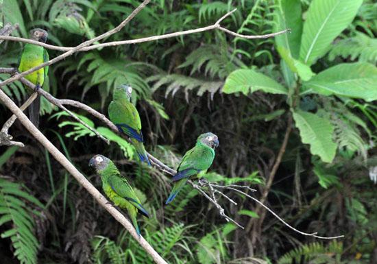 la selva amazon ecolodge ruth van sciver 18