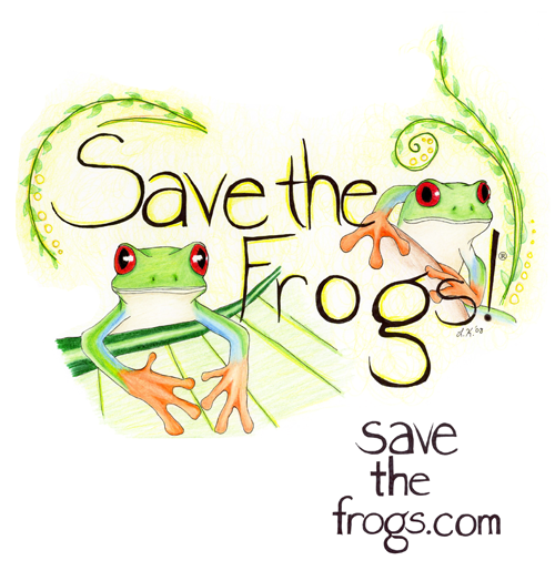 leah klehn red eye treefrogs art