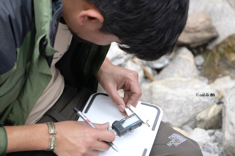 manaslu Taking measurements of an unidentified tadpole at Yuwang River Manaslu biraj shrestha