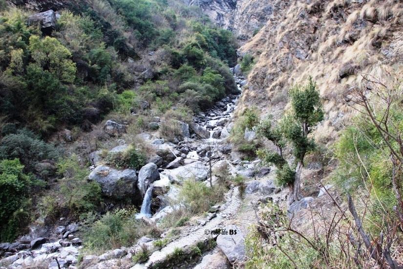 manaslu stream frog paha habitat in Manaslu biraj shrestha