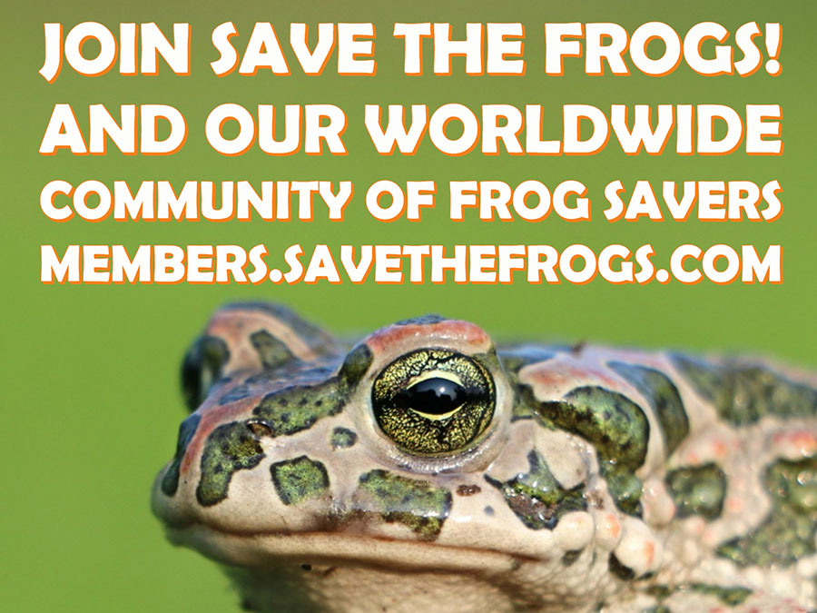 join save the frogs