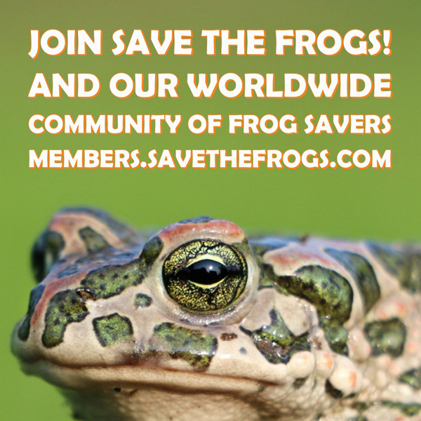 save the frogs membership