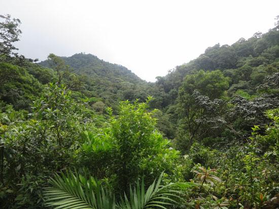 monteverde curi cancha hills