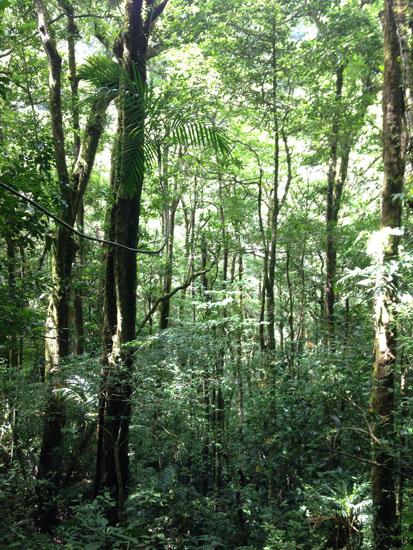 monteverde trees vertical