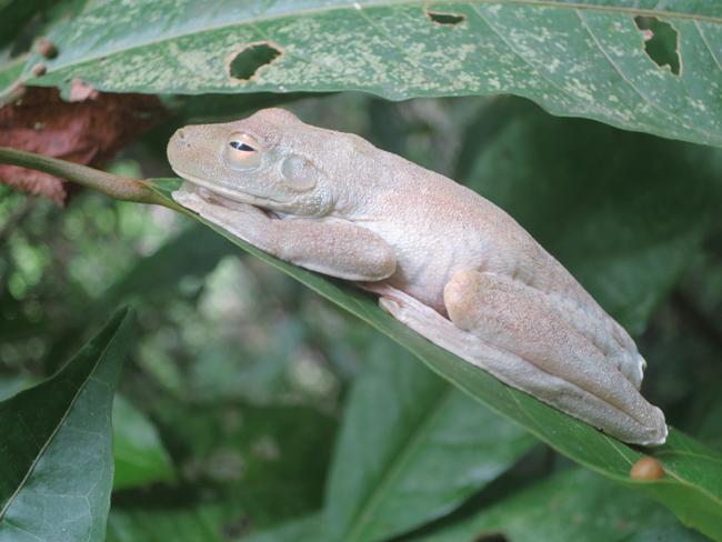 Costa Rica Ecotourism Families