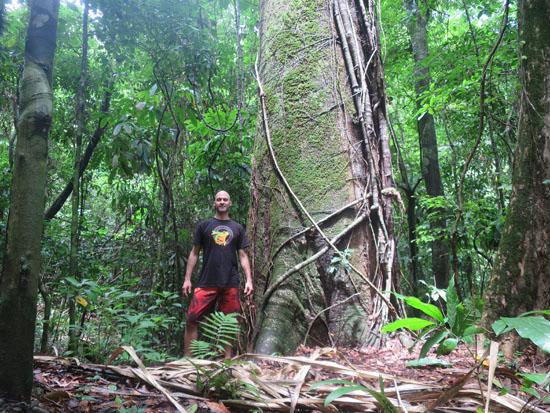 pacific kk tree 1