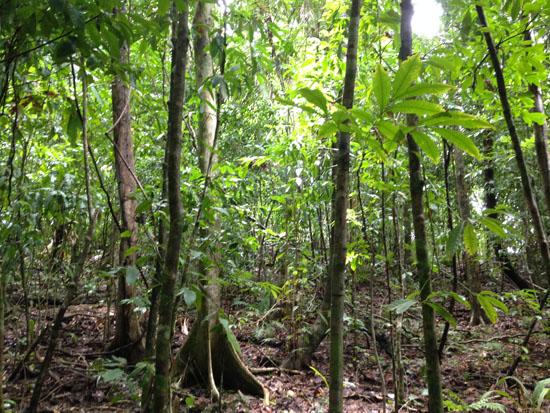 pacific manuel antonio forest 1