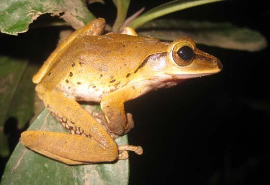 Naming Convention Amphibians