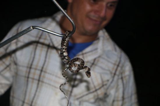 sarapiqui tirimbina snake hook