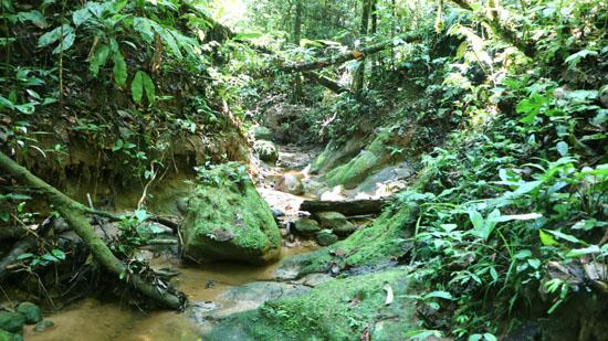 suchipakari ecotour