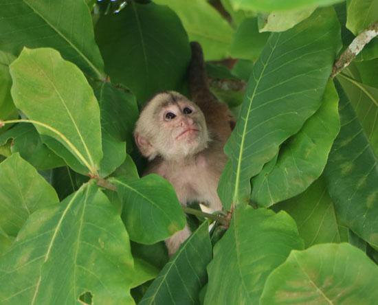 suchipakari misahualli monkey