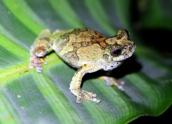 suchipakari pool frog 4