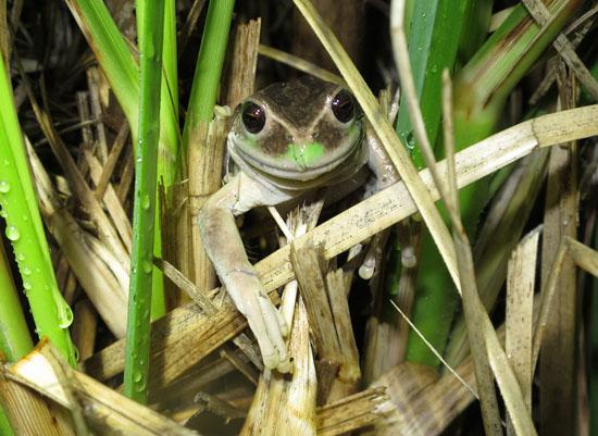 teleferico frog 1.jpg