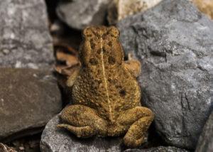 toad jobs