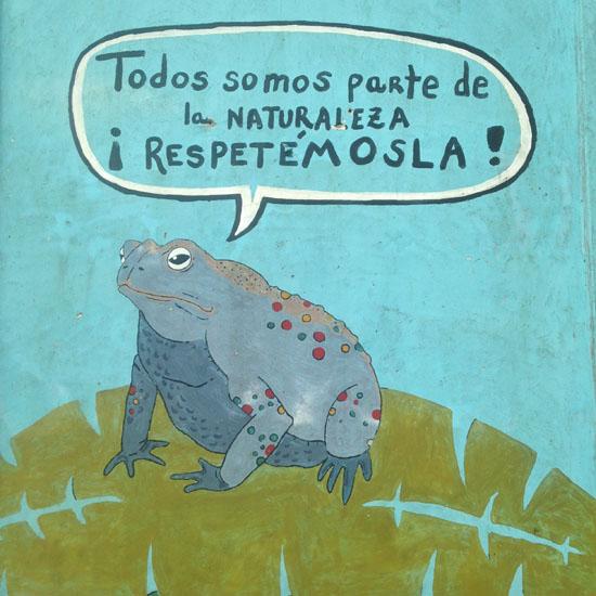 tortuguero art toad