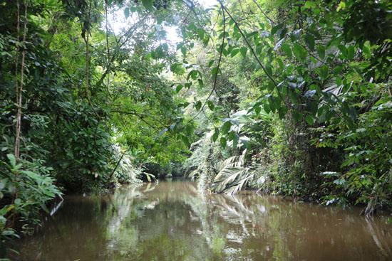 tortuguero river 3