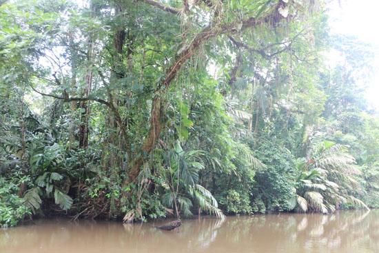 tortuguero river view