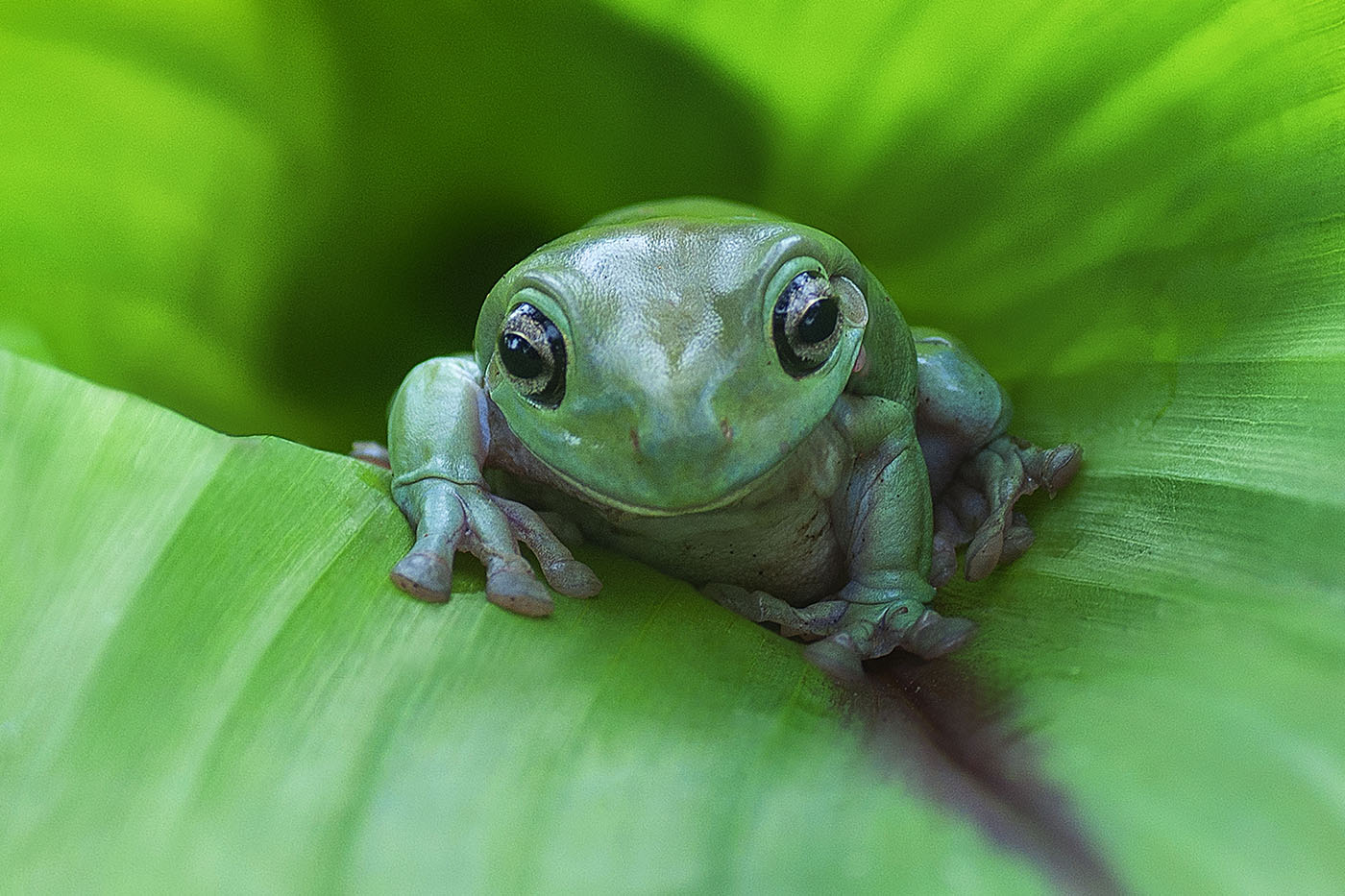 Frog Cryptocurrency